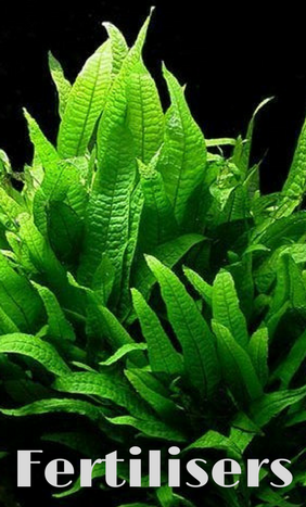 Aquatic Plants Fertiliser