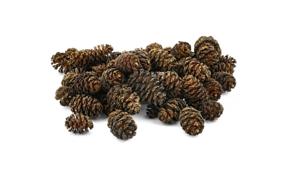 alder cones for aquarium aquaplantscare.uk