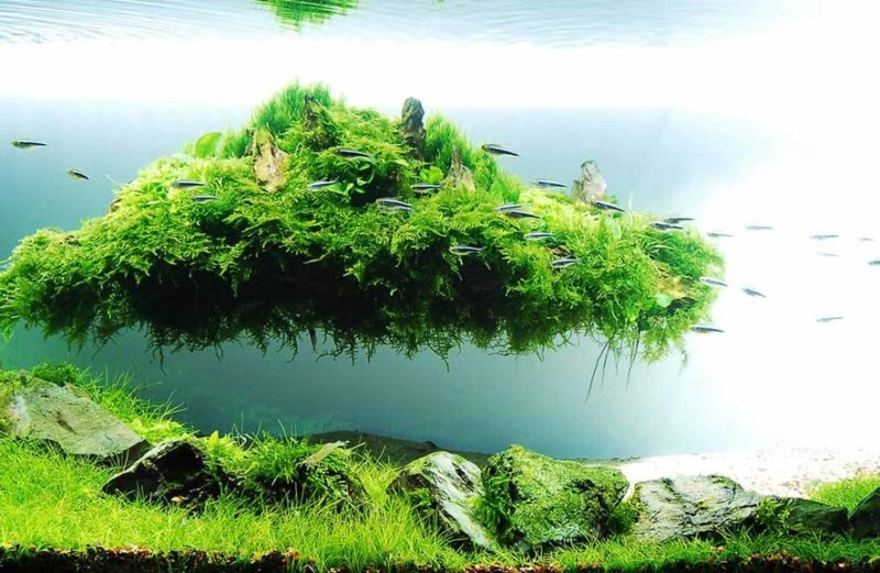 aquascape aquarium fertilisers natural decorations shrimp food fish premium food aquaplantscare.uk