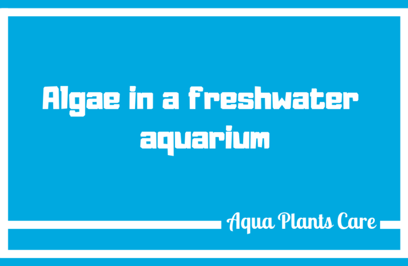 Algae in planted fish tank Aqua Plants Care